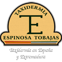 Taxidermia Espinosa